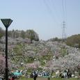 平岡公園梅林2
