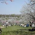 平岡公園梅林の花見