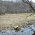 早春の湿原